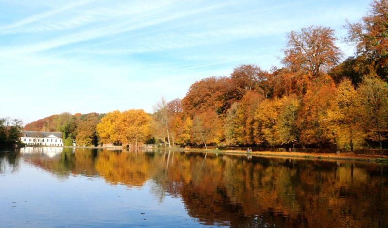 Forêt de Soignes Bruxelles