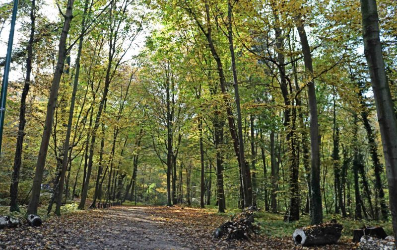 Promenade verte dans la forêt de Soignes à Bruxelles