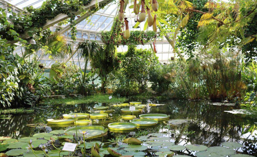 Jardin Botanique Meise Une Magnifique Collection De Plantes