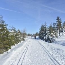 Hautes-Fagnes Belgique Neige ski