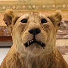 Africa Museum Bruxelles