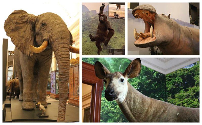 Eléphant Africa Museum