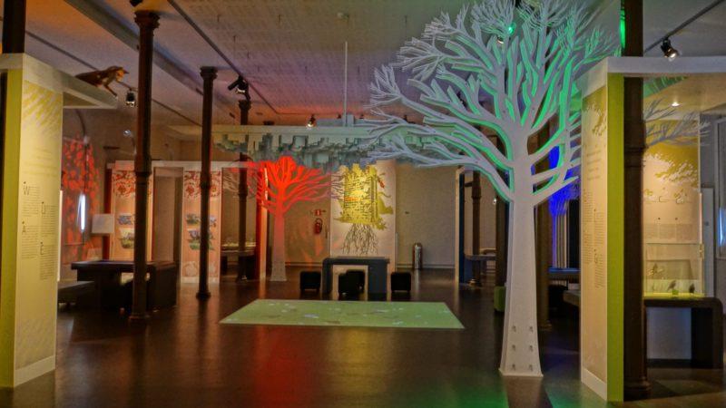 musée sciences naturelles Bruxelles