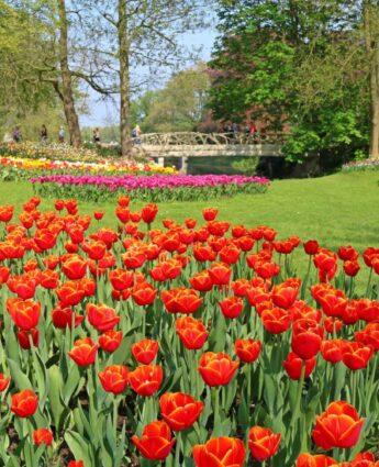 Floralia Grand Bigard 2019