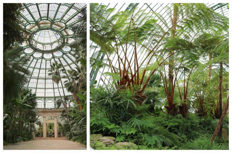 Jardin d'hiver serres de Laeken