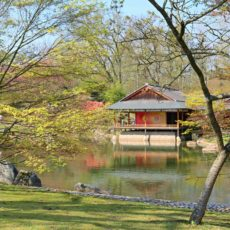 Jardin japonais Hasselt