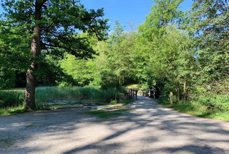Forêt de Soignes pique-niquer